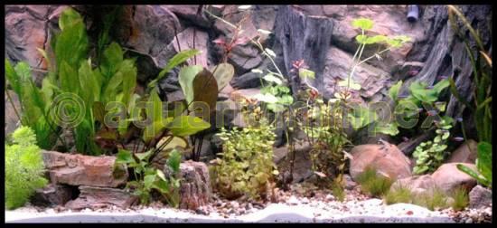 aquarium 3 d r ckwand root 50 60 80 100 120 150 200 3d aquariumr ckwand wurzel ebay. Black Bedroom Furniture Sets. Home Design Ideas