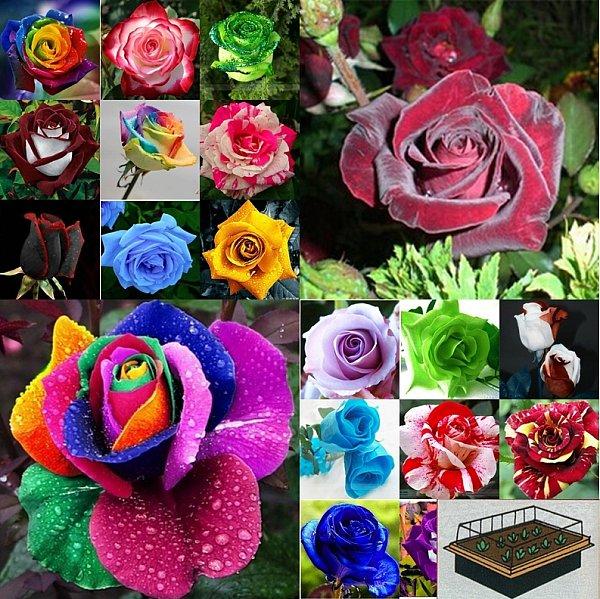 3 teiliges set mini gew chshaus mit 10 rosen samen und anzuchterde geschenk. Black Bedroom Furniture Sets. Home Design Ideas